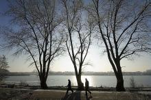 Réouverture des espaces boisés autour de la chaîne des Lacs
